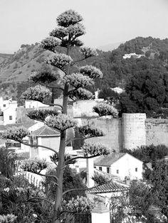 Recall - © 2012 - Niccolò Matterazzo