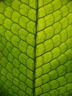 Alligator Plant  http://www.arcreactions.com/metric-wealth-mangement/ http://calgary.isgreen.ca/