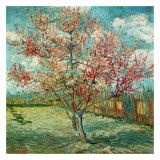 Vincent van Gogh Souvenir de Mauve painting for sale, this painting is available as handmade reproduction. Shop for Vincent van Gogh Souvenir de Mauve painting and frame at a discount of off. Vincent Van Gogh, Van Gogh Art, Art Van, Van Gogh Pinturas, Van Gogh Paintings, Tree Paintings, Canvas Paintings, Peach Trees, Peach Blossoms