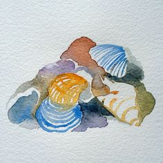 Sea shells 2 - watercolour by Marie Åhfeldt, Mås Illustra.