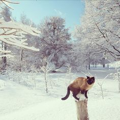 """I jumps up to get way from snow and snow here too!'"