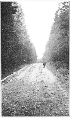 Forest Macadam road in Saxony Forest near Swartzenberg, Germany