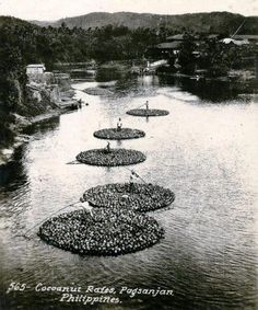 Coconut Rafts at Pagsanjan River, Laguna, Circa 1910 Philippines Culture, Filipino Culture, Asia, Historical Pictures, Rafting, Nostalgia, Coconut, History, Rivers
