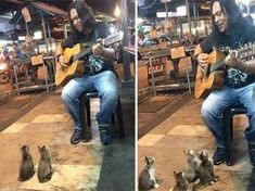 Kedicikler kendilerini müziğin ritmine bıraktı.. Detaylar ajanimo.com'da.. #ajanimo #ajanbrian #kedi #cat #hayvan #animal #müzik #music
