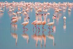 habitat_flamingos_624.jpg 624×416 pixels