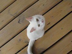А у нас сегодня кошка, родила вчера котят... - Ярмарка Мастеров - ручная работа, handmade