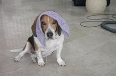 Knitting Blog by Mr Puffy the Dog