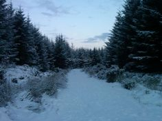 FOREST NEAR WICK Scotland, Wicked, Outdoor, Outdoors, Outdoor Games, Outdoor Living, Witch, Witches