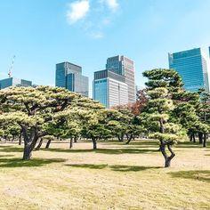 Tokyo gardens in Marunouchi. . . . #matkablogi #blogit #instablogit #matkailu #travelgram #instamatka #iamtb #travelblog #tlpicks #cityview #bluesky #skyline #travelbloggers #athomeintheworld #japan #tokyo #suitcasetravels #livetravelchannel #le Travel Channel, Throughout The World, Tokyo, Sidewalk, Skyline, Journey, Gardens, Japan, Blue