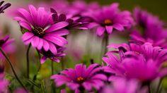 Flores moradas bellas - imagenes - wallpapers - Flores plantas y ...
