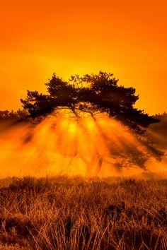 "vividessentials: ""Burning Bush   vividessentials "" Motivation Hall. Sending this ""Burning Bush"". Vividessentials fine. To Latilia00 and Alohavibee. As new members. Of Motivation Hall tribe...."