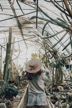 Cactus Land   Collage Vintage