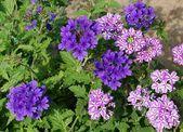 16 Pflegeleichte Blumen Fur Den Garten Blumen Fur Garten Garten Blumen
