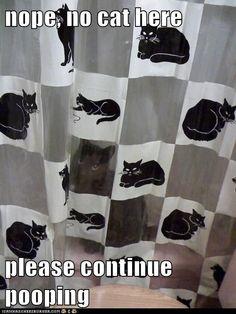 camoflauge cat