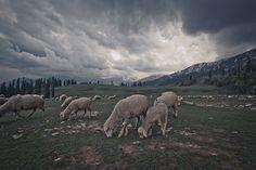 Leh, Ladakh - Set 15