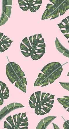 Summer wallpaper, pink wallpaper, wallpaper for your phone, cool phone wall Whats Wallpaper, Plant Wallpaper, Tropical Wallpaper, Summer Wallpaper, Iphone Background Wallpaper, Aesthetic Iphone Wallpaper, Screen Wallpaper, Cool Wallpaper, Pattern Wallpaper