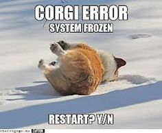 Funny pictures about Restart Corgi? Oh, and cool pics about Restart Corgi? Also, Restart Corgi? Corgi Meme, Funny Dog Memes, Corgi Dog, Funny Dogs, Dog Cat, Pet Memes, Puppy Meme, Animal Memes, Funny Animals