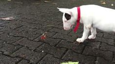 Funny Dog and a Crab