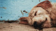 When all you've ever known is survival, the smallest act of kindness can change your entire world. In this story, that life-changing gesture was a simple morsel of food offered to a hungry stray dog. The events that grew from one …