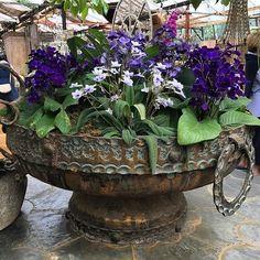 Selection of streptocarpus planted in a handmade copper bowl @petershamnurseries #gardenornaments #petershamnurseries #andrewstarkgardens #streptocarpus #indoorplants