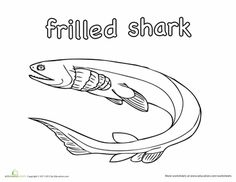 Frilled Shark Coloring Page