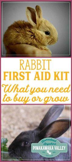 Rabbit First Aid Kit for Raising Meat Rabbits herbal remedies, rabbit health #rabbits #homesteading