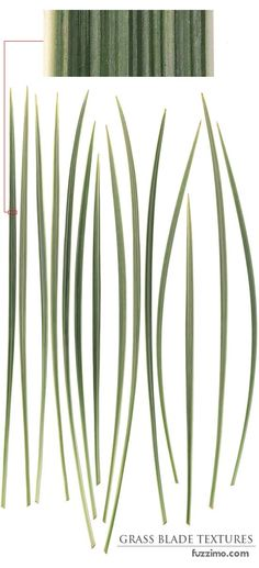 free digital grass blades textures