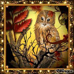 Owl lidge
