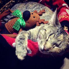 cat cuddling with leg