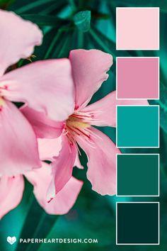 Oleander Pink + Teal Color Palette
