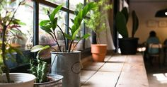 55 Easy Pet Friendly House Plants for Indoor Decoration https://decomg.com/55-easy-pet-friendly-house-plants-for-indoor-decoration/
