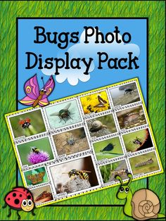 This Bugs Photo Poster Display Pack can be used for classroom displays, as well as being a super visual resource to engage students as they begin their learning journey about bugs and minibeasts! Lots of talking and listening, plus many questions should ensue! The photo posters are colorful and vibrant, and each includes a name label.