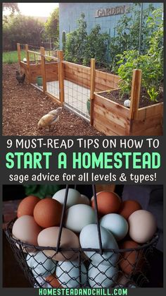 So you want to start a homestead? Read along for valuable tips that we learned first-hand to stay organized, set attainable goals, and have fun too!