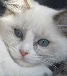 This cat looks like my mommy!