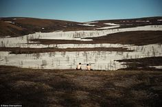 One of the Norilsk particularities is the lack of green spaces in the city where one can e...