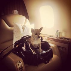Bye Ibiza!  On the way to Zurich!  #JetSetPup  by parishilton