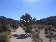 Joshua Tree National Park Their branches wind all funky-like skyward and do not provide any shade from the stunning sun. The Joshua Tree and namesake of the National Park, line the hiking trails prevalent throughout the park. The Keys View trail is the shortest at just a quarter mile, but provides an expansive view of the San Andreas fault and desert plains. Hike the Hidden Valley trail to navigate in and out of boulders and find that elusive shade.
