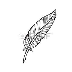 feather illustration - Google Search
