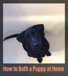 How to Bath a Puppy at Home Bathing A Puppy, Cheap Dog Food, Food Lab, Black Lab Puppies, Black Labs, Fur Babies, Labrador Retriever, Pets, Blog