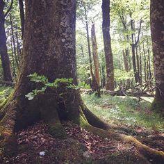 Raíces sólidas, hayas centenarias, bosques vírgenes... Sierra de Urbasa (Foto @ehva en #Instagram) Saber más... => http://www.turismo.navarra.es/esp/organice-viaje/recurso/Patrimonio/3168/Parque-Natural-de-UrbasaAndia.htm