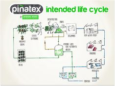 Pinatex Life Cycle   Pineapple Leaves