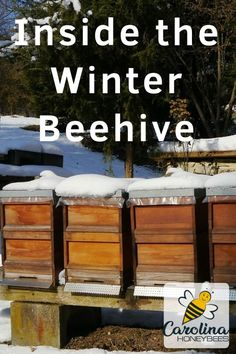 What do honey bees do in Winter? You will be amazed to learn how bees survive the cold winter months! Winter Greenhouse, Bee Hive Plans, Raising Bees, Bee Do, Bee Farm, Backyard Beekeeping, Bee Friendly, Places In Europe, Down On The Farm