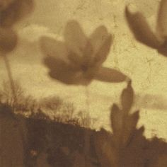 "Spheruleus - ""Revolving Fields"" (ambient, drone, electroacoustic)"