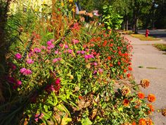Community Garden 2012  #garden_awards #community_garden #flowers #gardening #landscaping #native_plants