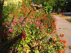 Community Garden 2012  #garden_awards #community_garden #flowers #gardening #landscaping #native_plants