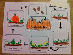 Kindergarten Kids At Play: Pumpkin Activities & Free pumpkin lifecycle worksheet