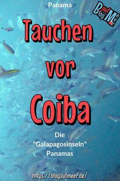 """Du möchtest das absolute Großfischangebot? Hier hast du es! Vor der Isla Coiba findest du Riesenmantas, Walhaie, Hammerhaie, Wale und so viel mehr! Den Parque Nacional Coiba in Panama nennt man nicht umsonst auch die """"Galapagosinseln Panamas"""" also her mit dir! Unter dem Link findest du unseren Erfahrungsbericht und eine Infobox voll mit Infos zur Anfahrt, Kosten, Übernachtungen, Unternehmungen etc. für dich! #Panama #Panamareisen #ReisetippsPanama #tauchen #diving #veraguas #IslaCoiba… Koh Lanta Thailand, Wale, Travel Agency, Beautiful Islands, Have Fun, Around The Worlds, Rafting, Messages, America"""