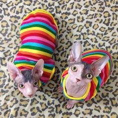 Even hairless cats can be cute! My two would kill me if I did this...but cute none the less.