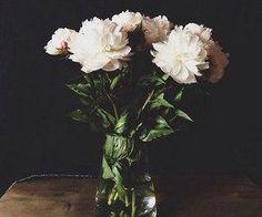 #whiteflowers