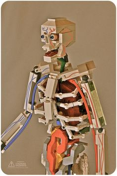 Anatomical Skeleton made out of LEGO.
